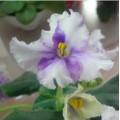 violet2014may